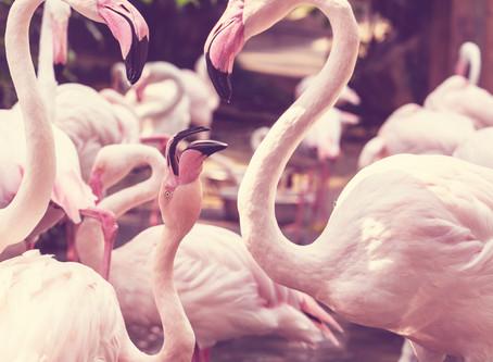 Sé un flamingo en un mundo de palomas.