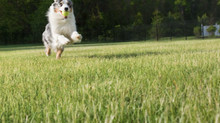 NC State publishes new guide to organic lawn care