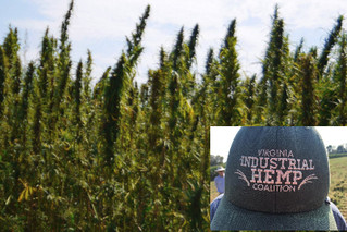 Survey to capture hemp production in the U.S.