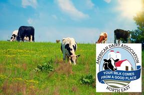 2020 Dairying for Tomorrow award winners announced