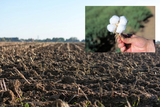 TN crop yield forecast is highly variable