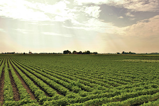 Yields of Virginia soybeans are expected to be up 3 bushels per acre from a year ago