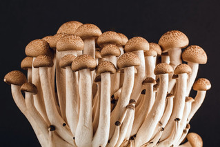 Virginia growers are putting mushrooms on the map
