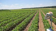 Georgia's major crops looking good in 2021