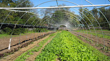 NCD&CS offers organic certification cost-share assistance