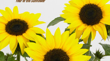 2021 is the Year of the Sunflower