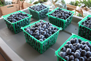 Multi-state team studies the use of essential oils in blueberry production