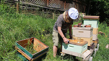 Bee monitoring effort launched in PA