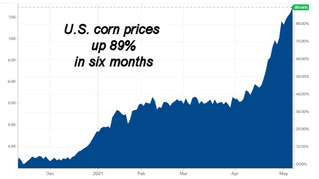 Farmers in Mid-Atlantic Region watching corn prices closely
