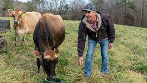 N.C. dairy farmers find new opportunity in herd shares