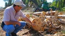 """Regeneration harvest"" to restore hardwood forest in TN"