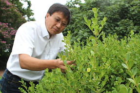 Researchers at VT receive $4 million grant to improve boxwood blight prevention