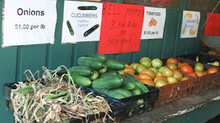 Advice for small market vegetable growers offered by UGA Extension