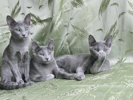 Котятам найдены новые семьи