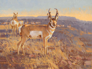 High Desert Pronghorn 9x12 oil on linen