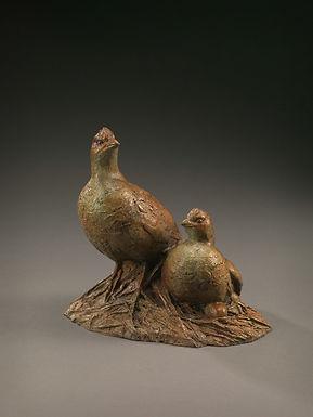 matia-quails.jpg