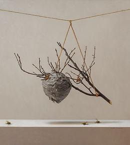 Fraser-Wasp Nest.jpg