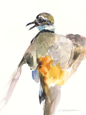 Kildeer Display.jpg
