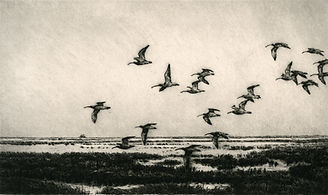 Coursing Curlew, 6 12 X 11 inches, 600dp