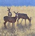 Muley Trio 36-36 (1).jpg