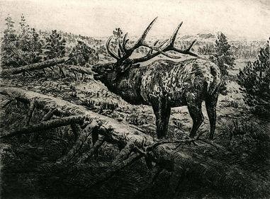 Bugling Elk, 7 X 9.2 inches.jpg