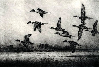 Low Flight of Pintails.jpg
