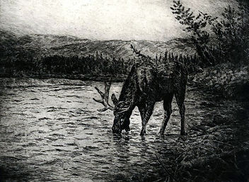 Lone Moose, 8 X 10.6 inches.jpg