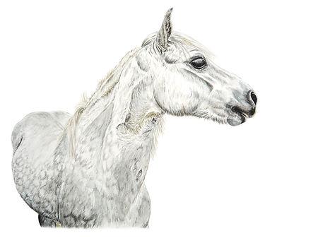pony eriksay.jpg