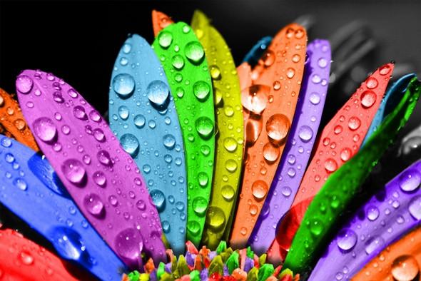 ColoredFlower_25p.jpg