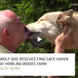 Pitched, shot, wrote, edited, and reported on camera about a unique wolfdog rescue.  Additional outtakes video of standup became viral digital content.