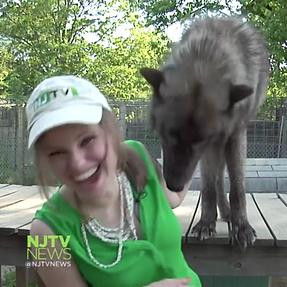 Wolfdog Sabotages Standup (76K views & 772 shares on Facebook)