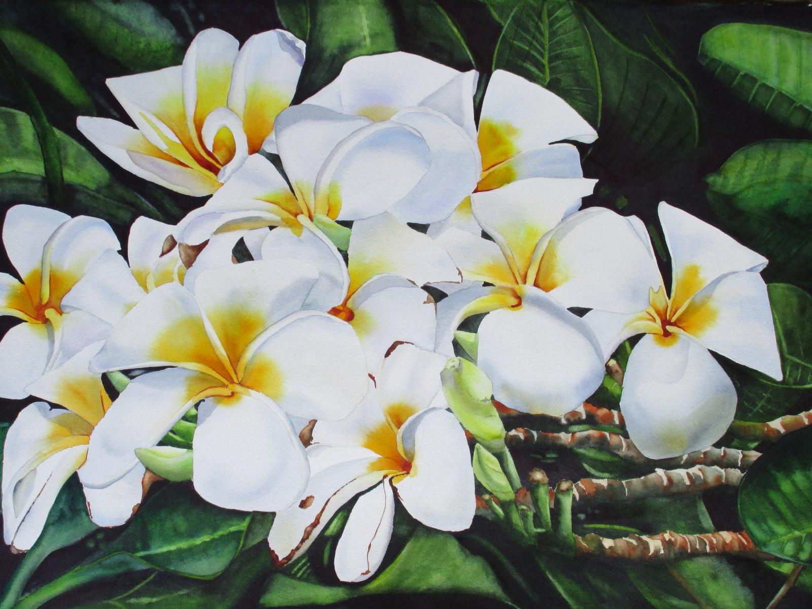 Mauna Lani White Plumeria