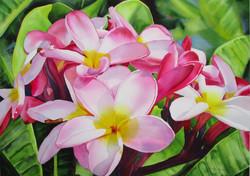 Nohea Pink Plumeria