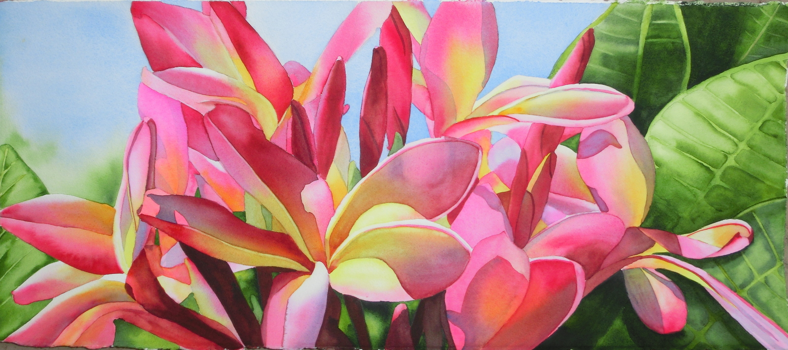 Pink and Yellow Plumeria II