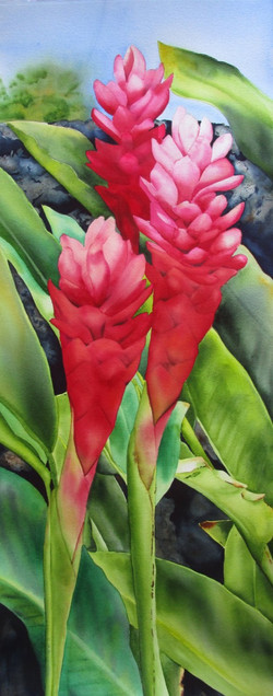 Mauna Lani Red Ginger
