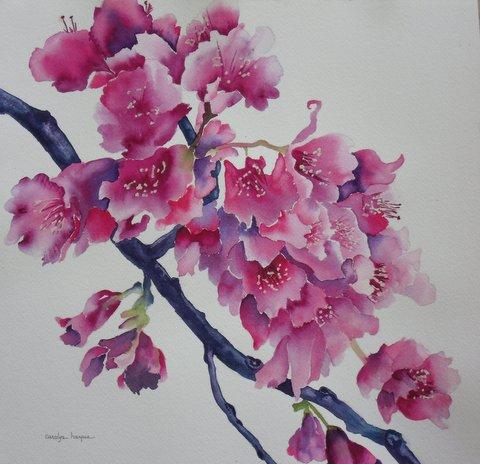 Waimea Cherry Blossom