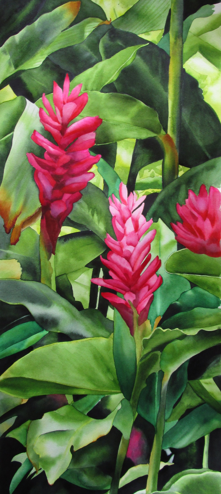 Hawaiian Red Ginger