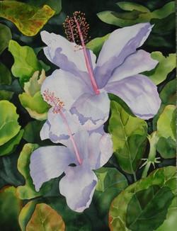 3 Hibiscus
