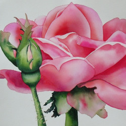 Rose and Bud