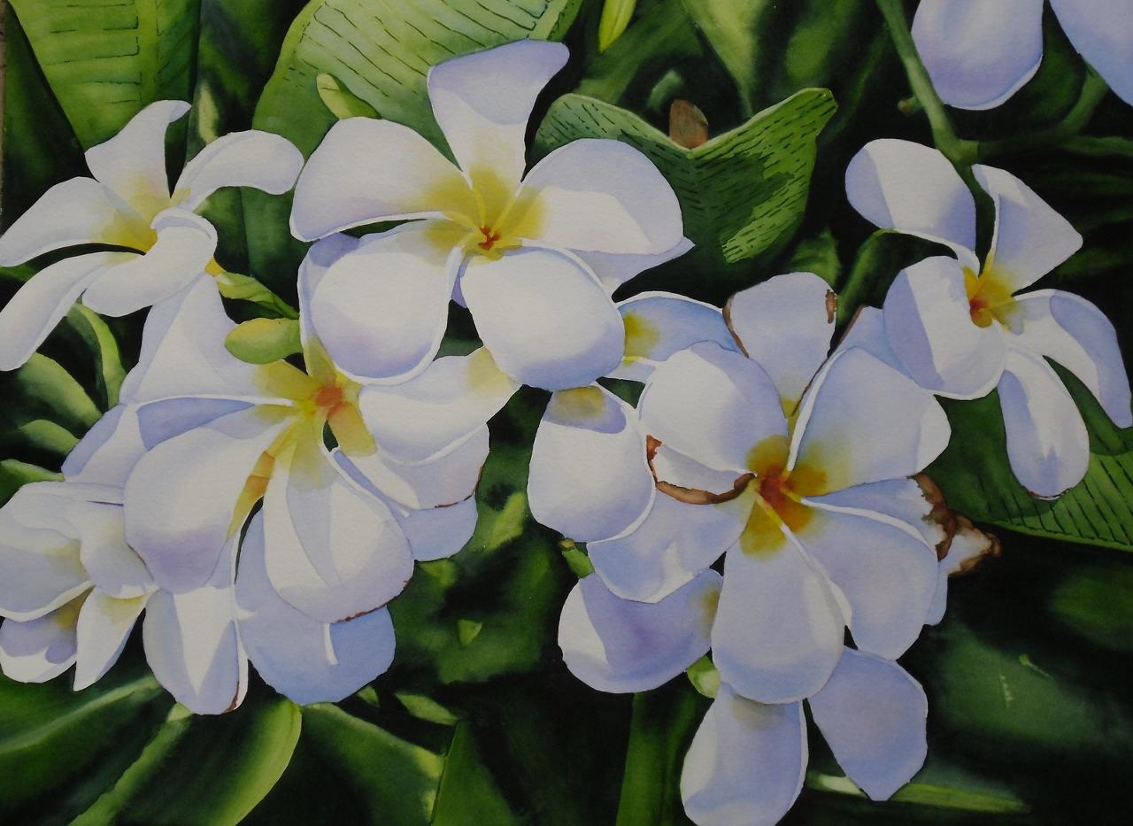 Nohea White Plumeria