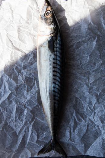mackerel.foodphotographer.NoemiScavo.jpg