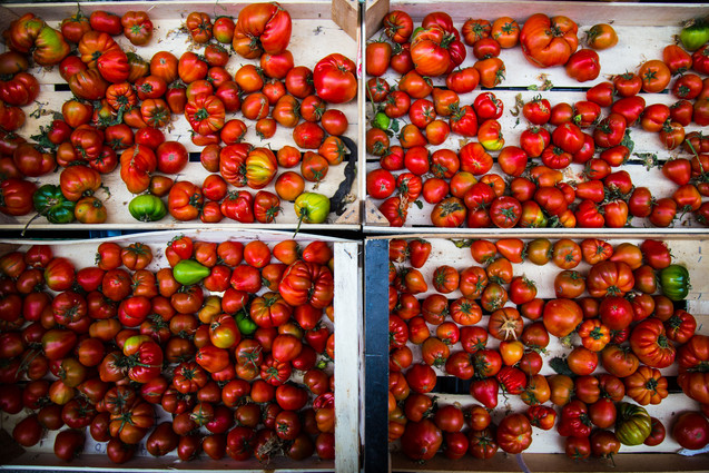 London_food_travel_photographer_italian_tomatoes