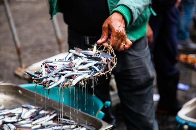 London_food_travel_photographer_anchovies