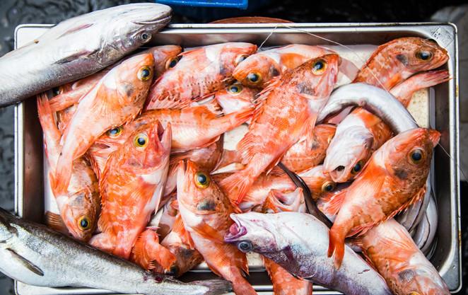 London_food_travel_photographer_goatfish