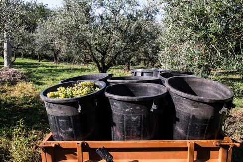 harvest_food_travel_photographer_italy