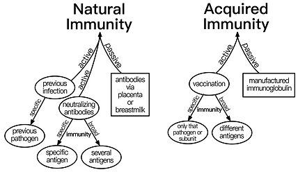 infographic - types of immunity.jpeg