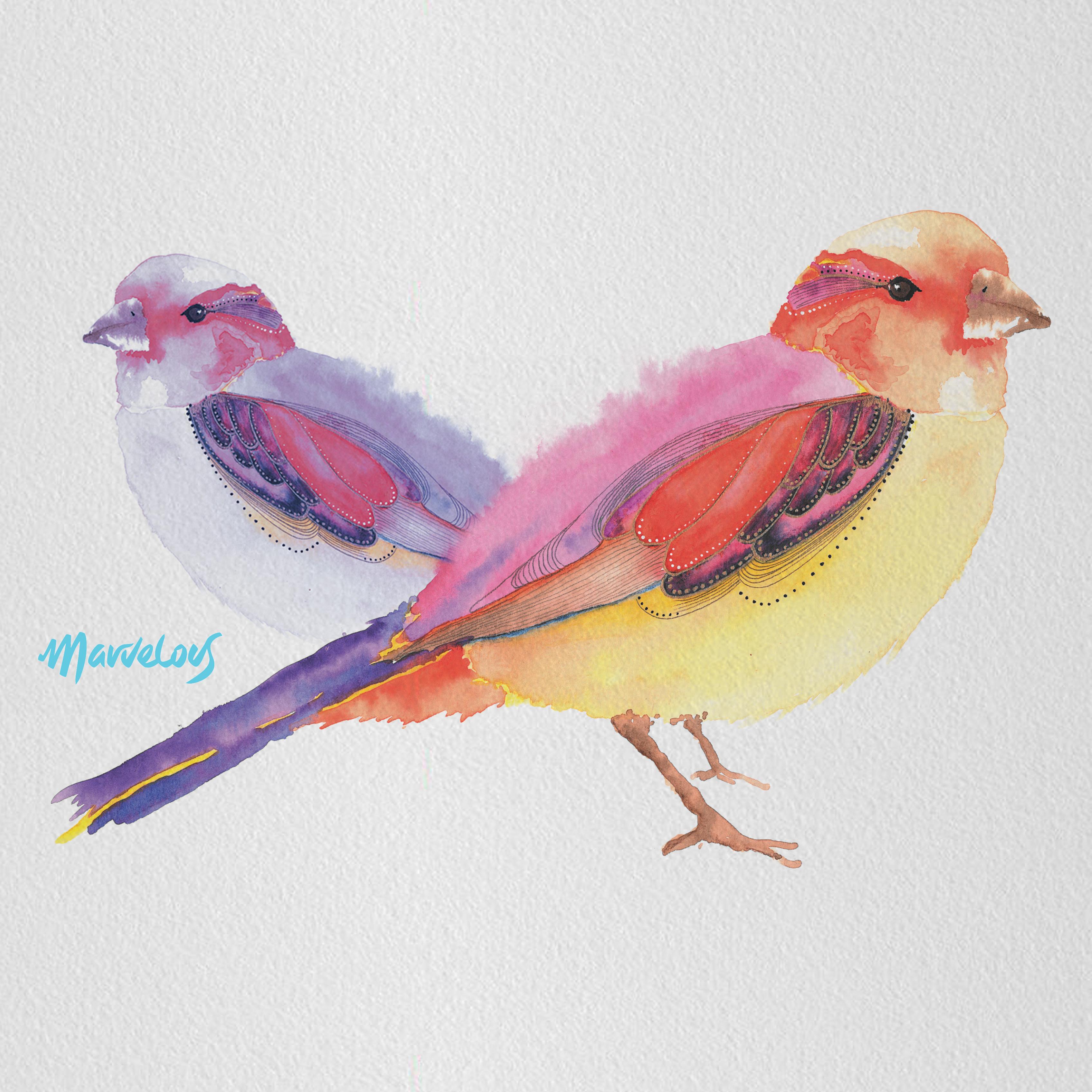Pájaros Marvelous