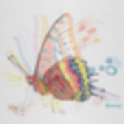 Mariposa arte final web.jpg