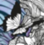 fond papillon wix.png
