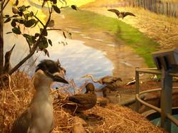 TN National Wildlife Refuge